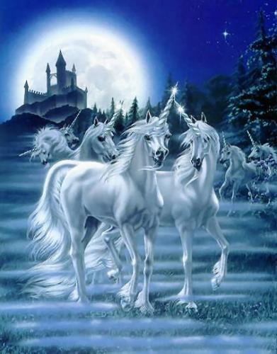 Unicorn_-9839